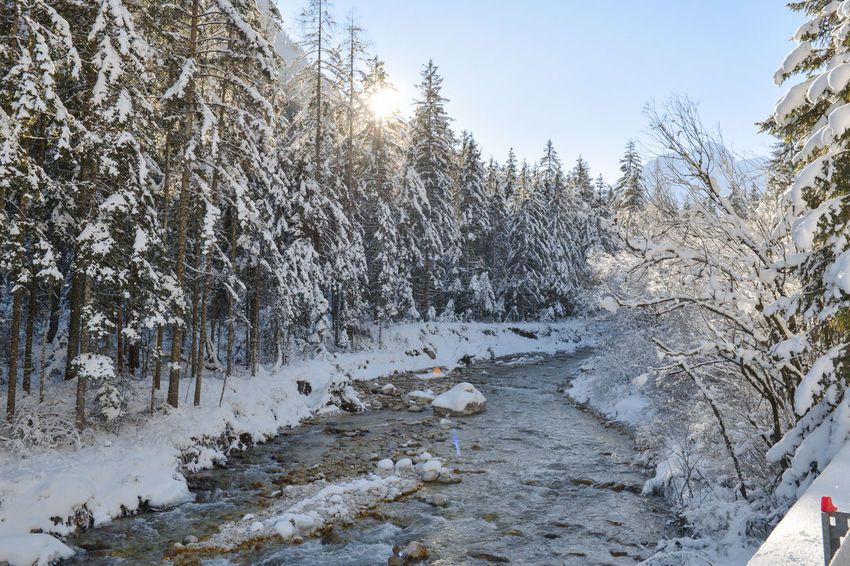Christmas Cold Cold Days Cold Temperature Cold Weather December Ice Ice Age Icy January Nature New Year River Snow Snow Covered Snow Covered Landscape Snow Covered Trees Snowing Tree Winter Winter Winter Trees Winter Wonderland Wintertime Winterwonderland