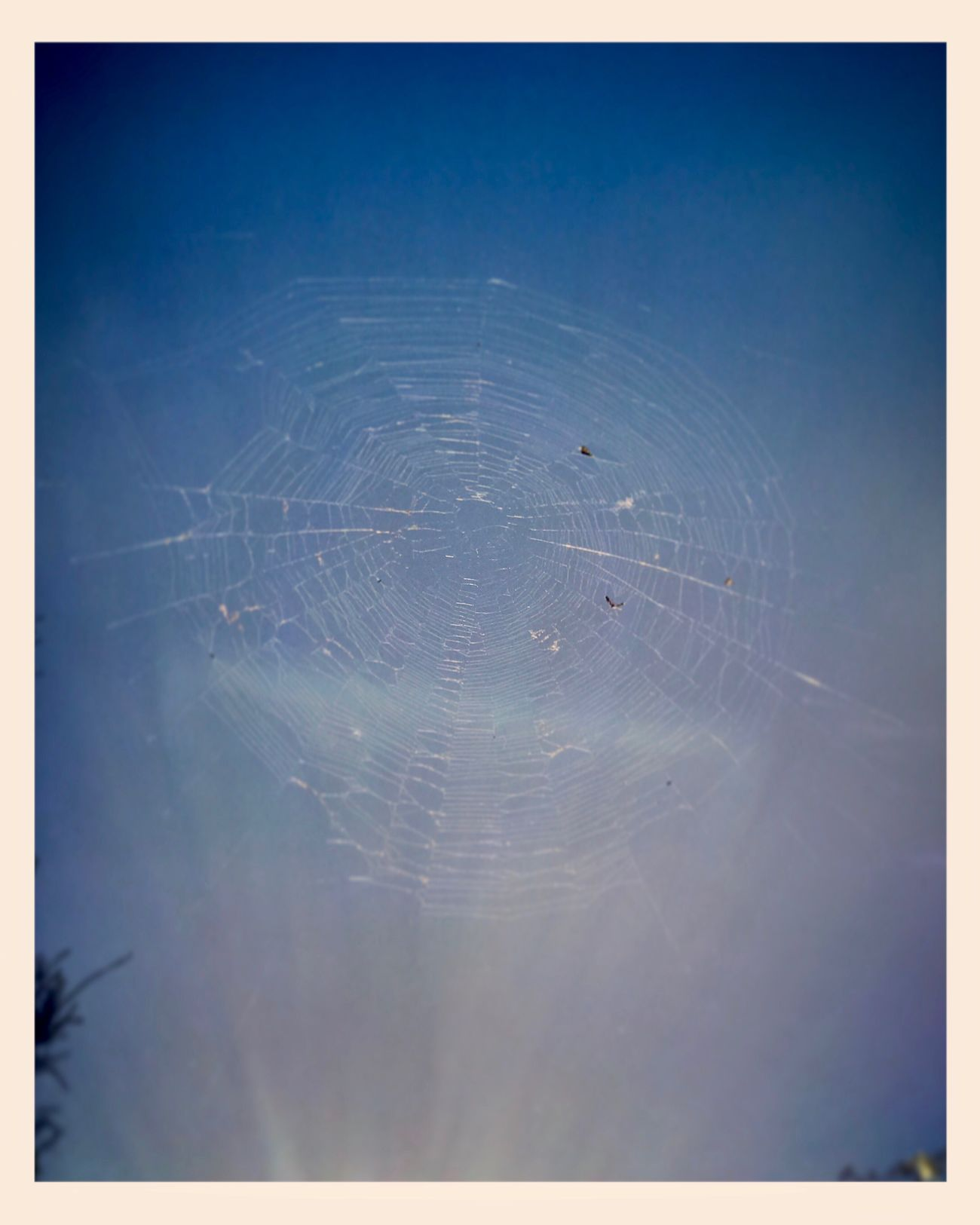 Web in the air 🕷🕸🕷 Webintheair Spiderweb Insects  Spiderworld Nature WhileIwaswalking Suns Glimmer 🕷🕸🕷