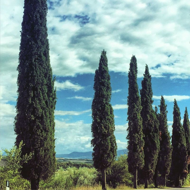 Growth Nature Tree Sky Beauty In Nature No People Field Tranquility Day Outdoors Scenics Cloud - Sky Landscape Tranquil Scene Plant Green Color Grass Tuscany Italy Toscana Sky And Clouds EyeEmNewHere