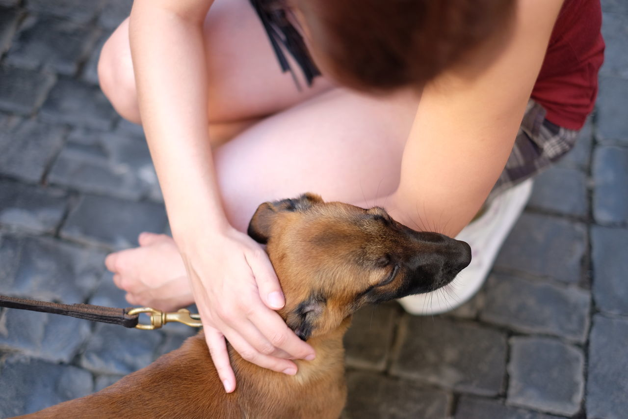 Beautiful stock photos of spain, Animal Themes, Bonding, Cobblestone, Crouching