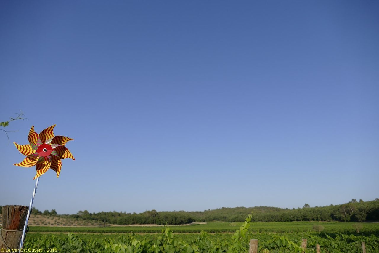 Series Vine - 2/10 - Se promener dans les vignes / walk in the vineyards Vineyards  Sky Blue Nature Summer Landscape_Collection