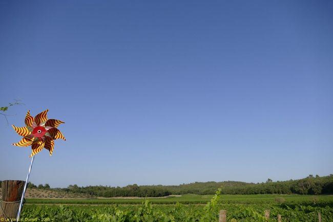 Series Vine - 2/10 - Se promener dans les vignes / walk in the vineyards Vineyards  Sky Blue Nature Summer Landscape_Collection