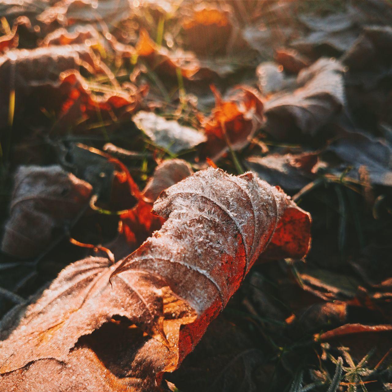 Beautyful nature Morning Light Leafs Sunlight Frozen