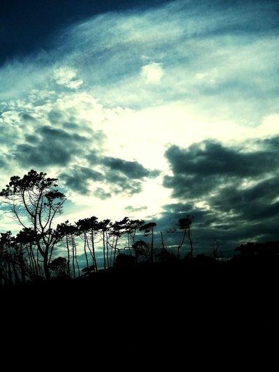 Noja Nicetime Nice Day Nice Sky Skydreams Sky Collection Marcandoladiferencia Tree 2015