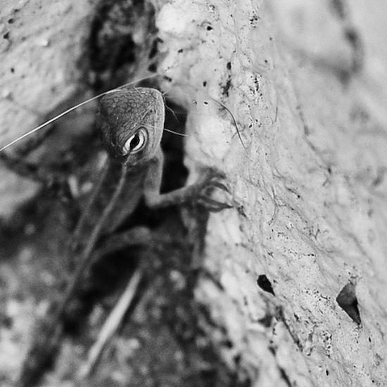 Tout tout petit gecko... LaReunion