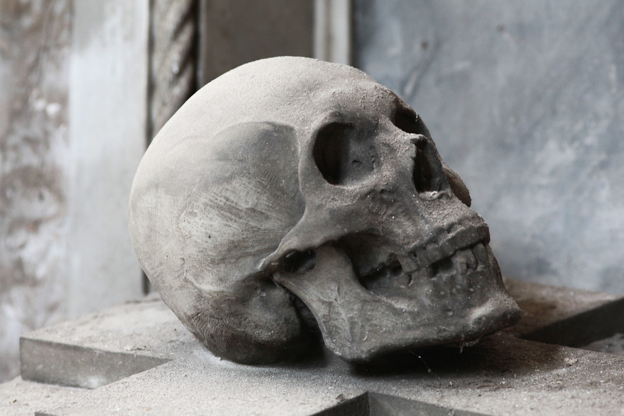 Beautiful stock photos of skull, Art And Craft, Built Structure, Close-Up, Day
