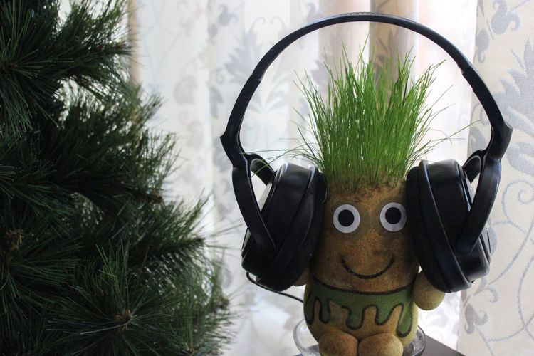 Close-up Day Decoration Envision The Future Green Green Color Growth Headphones Leisure Activity Lifestyles Nature Outdoors Plant Plant Room Sky Tree The Mix Up