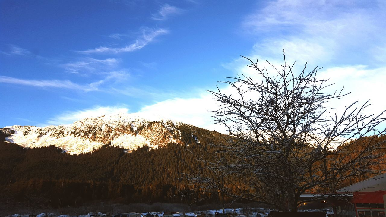 Low Angle View Of Bare Tree And Snowcapped Mountain Against Sky
