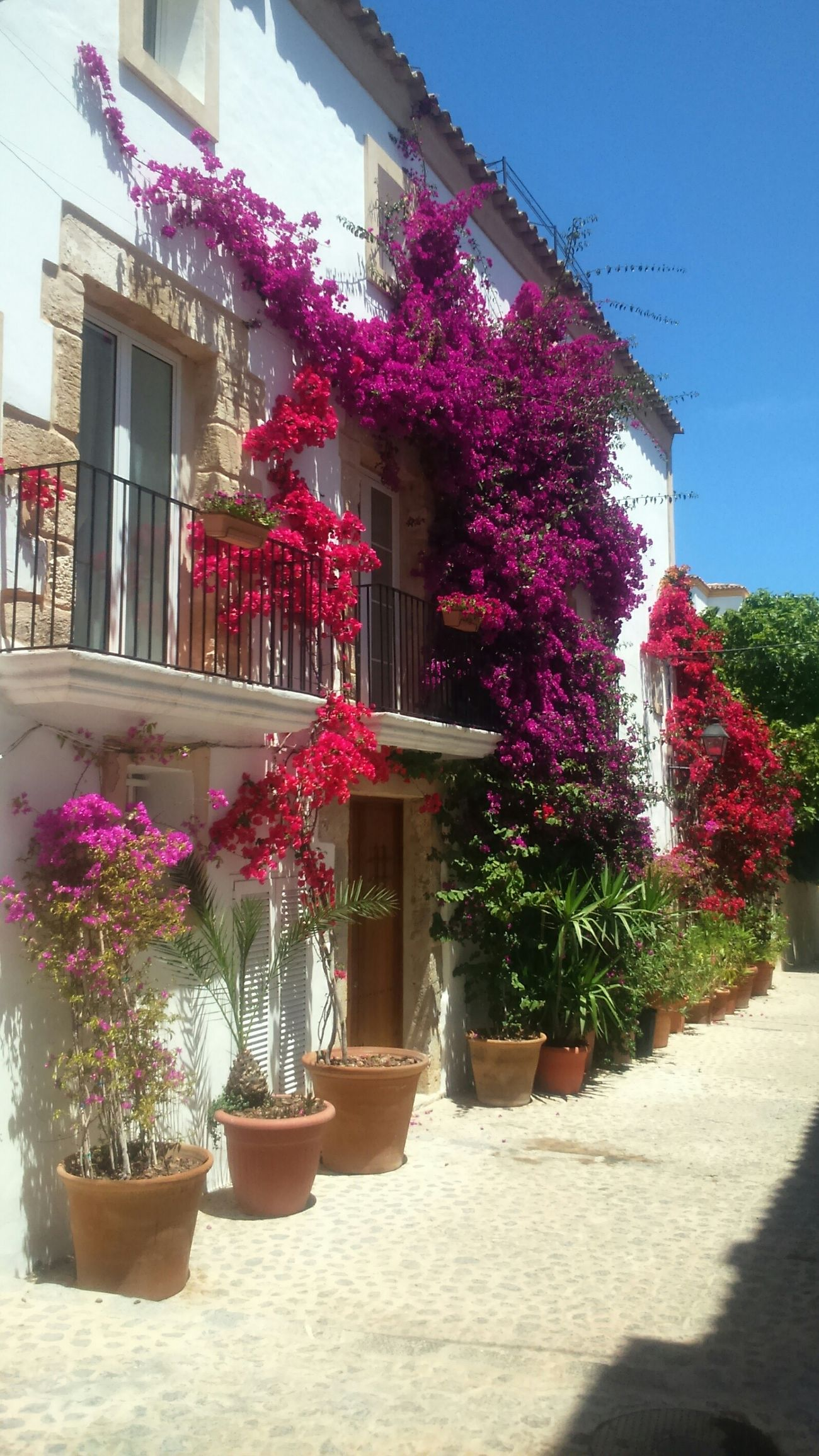 Ibiza colour flowers street