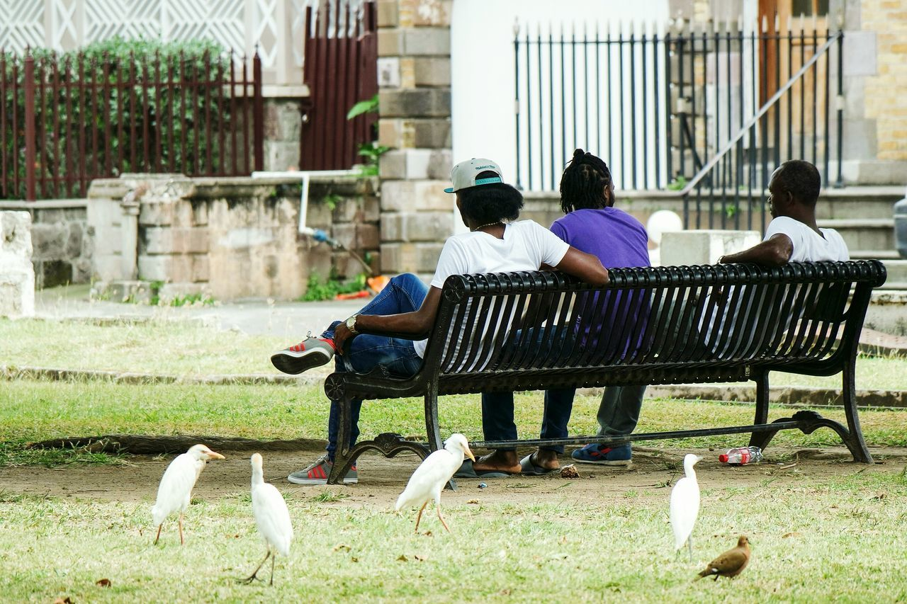Streets life in St. Kitts Sitting People Young Adult Women Togetherness Full Length Men Outdoors Friendship Adult Bonding Young Women City Adults Only Happiness Day Cheerful Beauty In Nature Nature Mammal EyeEm Best Shots Fresh 3 Eye4photography  Open Edit Streetphoto_color