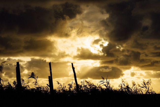 Silhouette Sunset Cloudy Sky Wood Wooden Poles Beauty In Nature Cloudscape Sky Cloud Calm Sea Non-urban Scene September 2016 September Japan Photography Atomosphere Travel Hokkaido,Japan Hokkaido