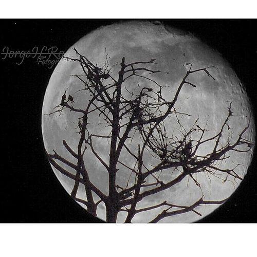 Luna Luna Llena Pereira Colombia Es Bella Full Moon Night  Panasonic Dmc Lz40 Jilroa Moon Adventure Club