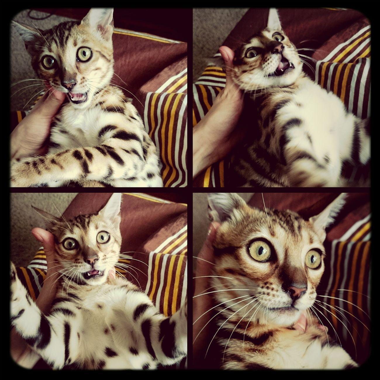 Emotions Cat Catsagram