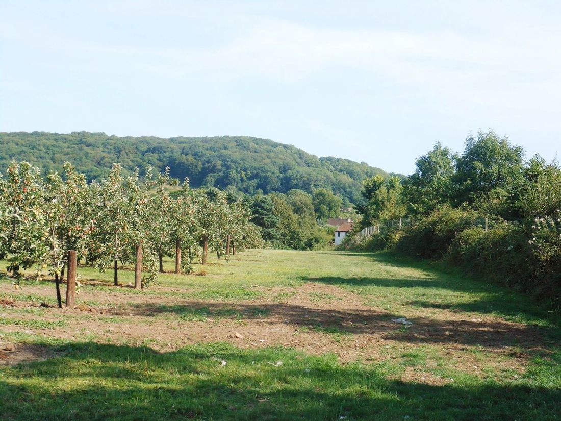 Strawberry Line Old Railway Line Apple Orchard Cider Orchard Apples Orchard Countryside Walking Somerset