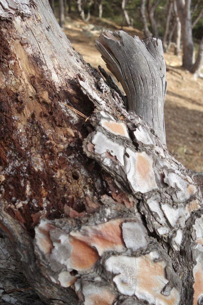 Close-up Flora Tree Trunk Tree Bark Provence