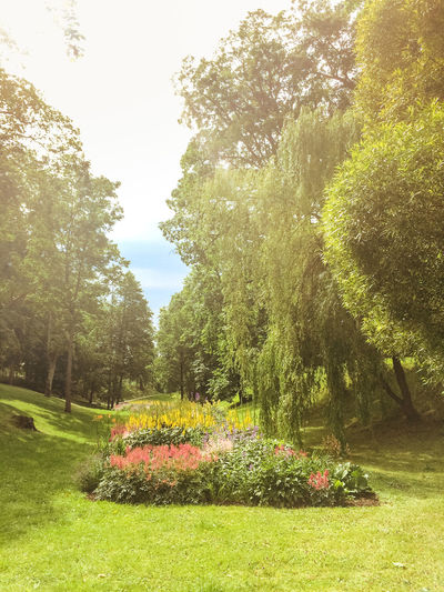 Pils Parks, Kuldiga. Latvia Beauty In Nature Change Day Forest Grass Green Green Color Growing Growth Kuldiga Latvia Lush Foliage Narrow Nature Outdoors Park Plant Relaxing Moments Summer Summertime Tranquil Scene Tranquility Tree