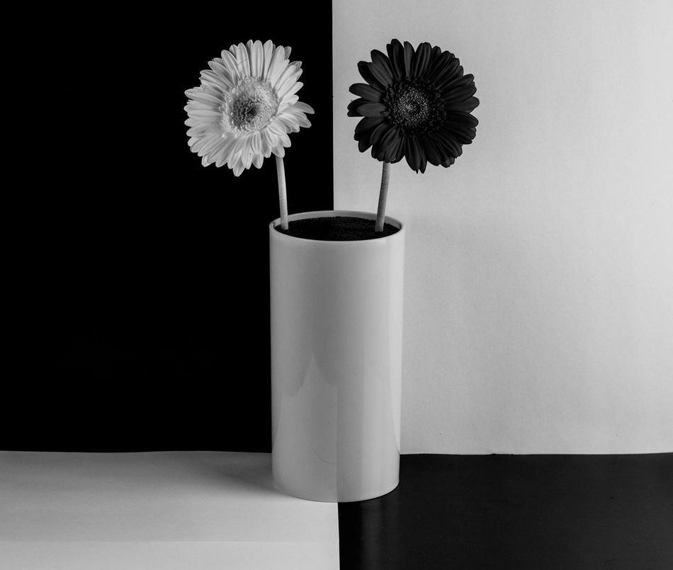 Beauty In Nature Close-up Day Drink Flower Flower Head Fragility Freshness Growth Indoors  Minimal Minimalism Minimalist Minimalist Photography  Minimalistic Nature No People Paper Studio Shot Table Vase