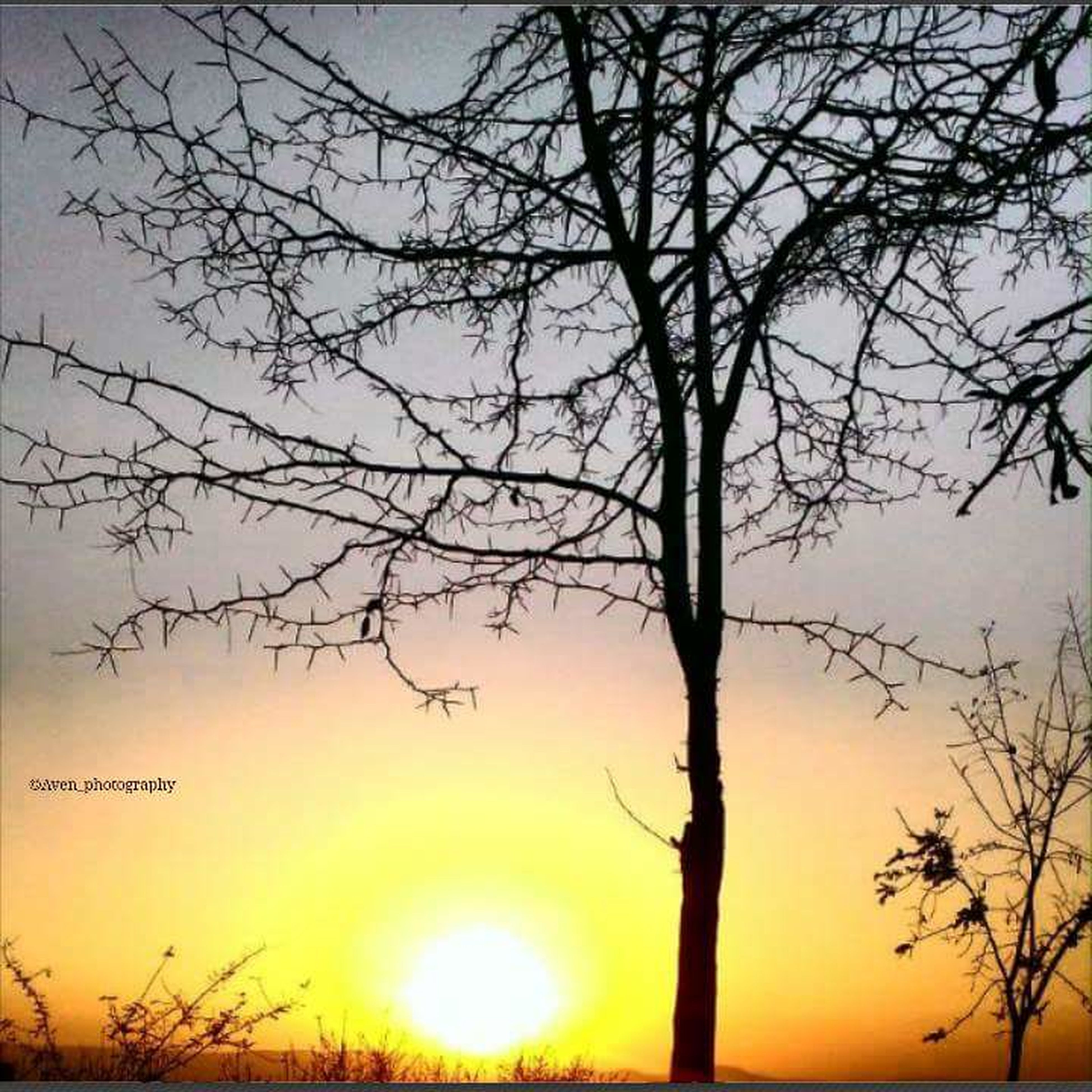 sunset, silhouette, tranquility, bare tree, tranquil scene, scenics, beauty in nature, sun, tree, branch, sky, nature, orange color, idyllic, tree trunk, sunlight, outdoors, no people, non-urban scene, growth
