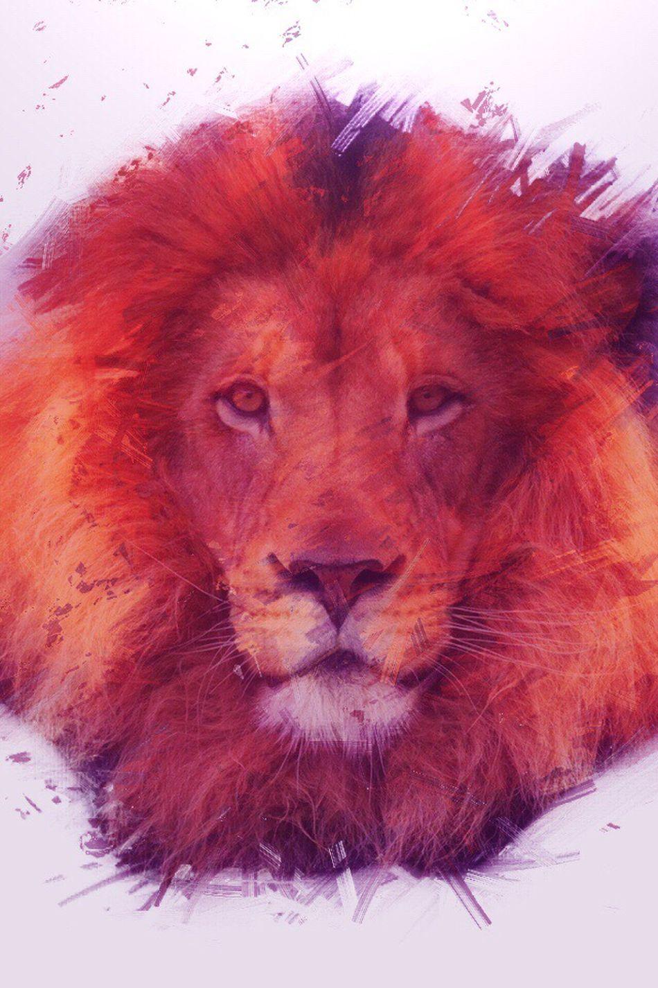 Majestic lion. Wassupworld Messing Around