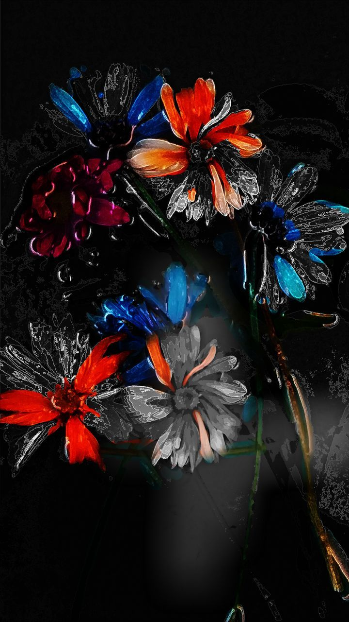 flower, no people, beauty in nature, nature, multi colored, indoors, fragility, freshness, flower head, close-up, black background, day