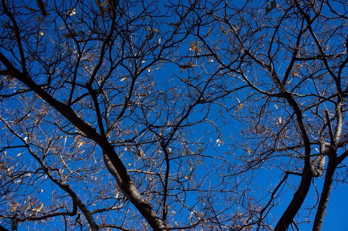 Low Angle View Blue Tree Sky Branch Nature Beauty In Nature Bare Tree Outdoors No People Day Lookingup Vertical Light And Shadow Pattern Streetphotography Street Photography