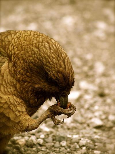 Nature On Your Doorstep Kea EyeEm Nature Lover Birds Native Bird Nature Animals