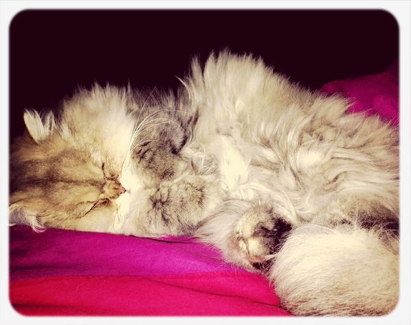 Sleepy Time I Love My Cat