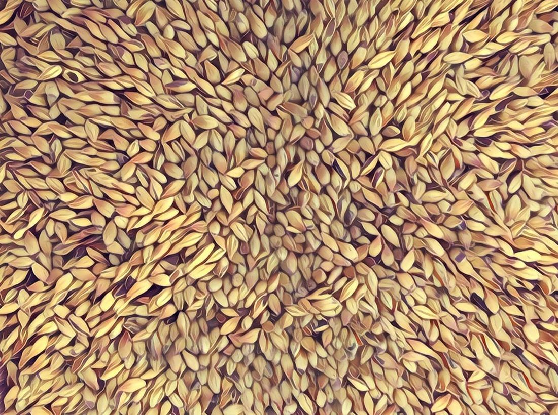 Backgrounds Full Frame Healthy Eating Abundance Food Cereal Plant Food And Drink No People Large Group Of Objects Close-up Ingredient Agriculture Wheat Seed Nature Rice - Cereal Plant Outdoors Day Making Beer Brewery Eyeemphotography Taking Photos Malt Mout Schroten making beer