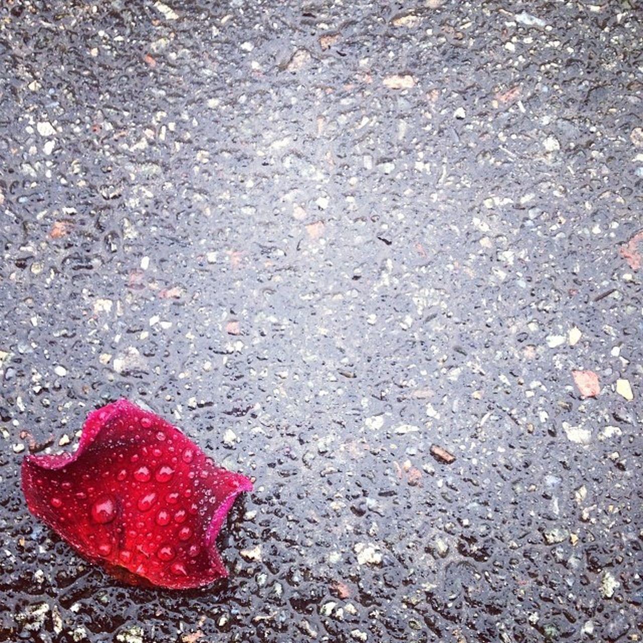 Leaf of Autumn Leaf Instagram Igukraine Igersukraine Kiev Ukraine Rosé Asphalt