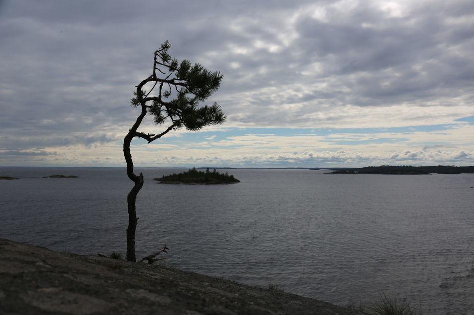 Eternal Loneliness Green Karelia Loneliness Nature North ветер карелия Море небо непогода Одиночество север серый