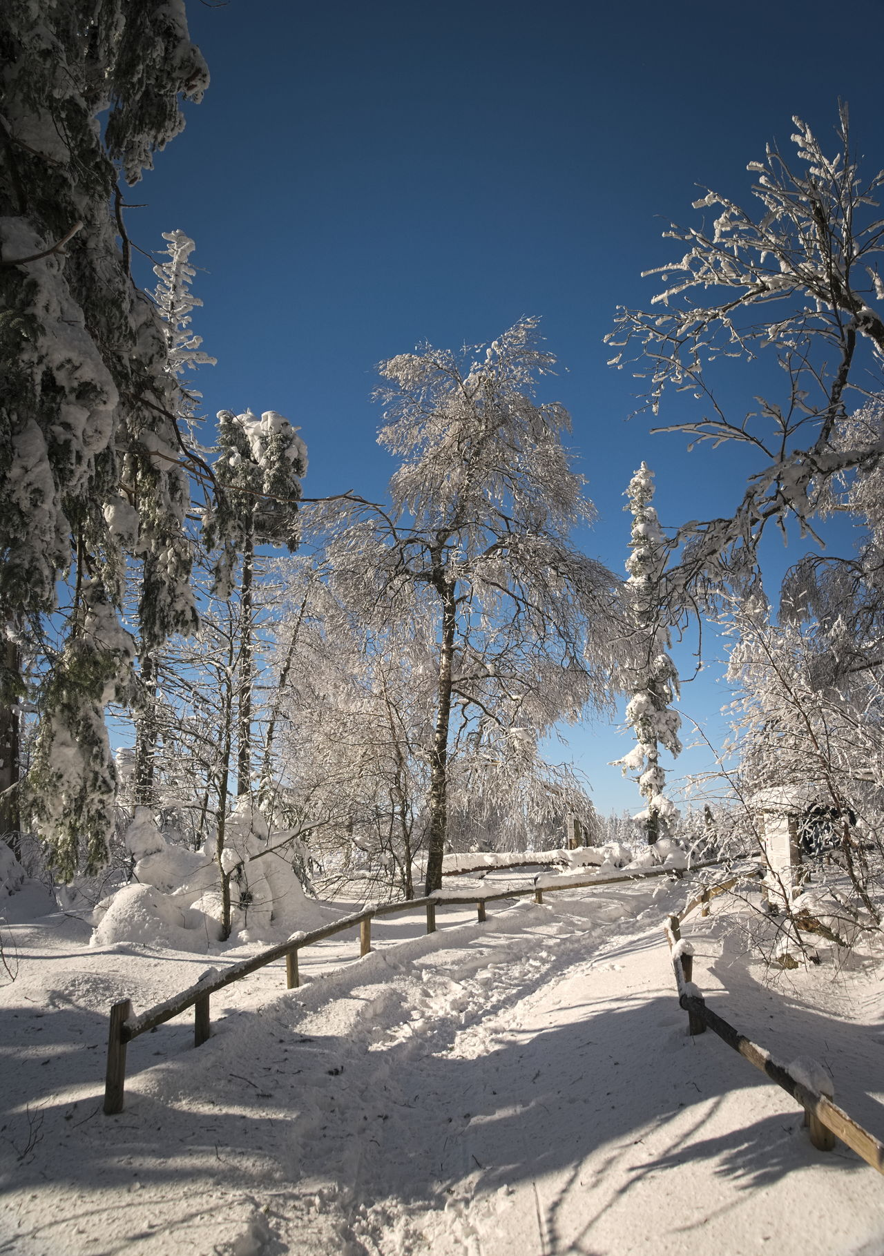 Path in the snow - Schwarzwald - Germany Beauty In Nature Blue Cold Temperature Day Forest Photography Into The Great White Open Landscape Nature Naturelovers No People Outdoors Path In The Snow Sky Snow Tree White And Blue White And Blue Sky Winter Winter Wonderland Wintertime