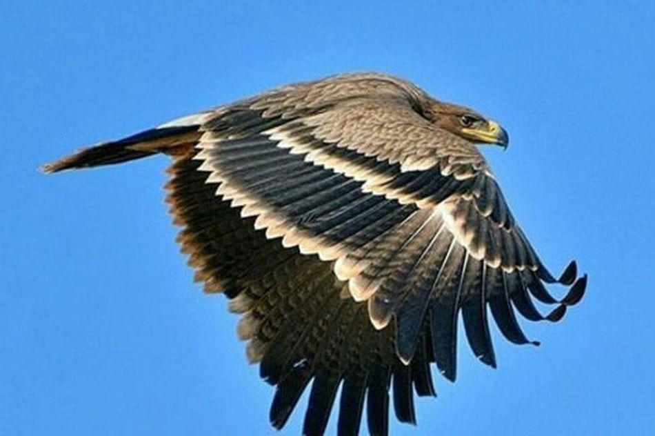 Taking Photos Birds Cheese! Eagle EaglesNATION Amazing_birds Bird Photography