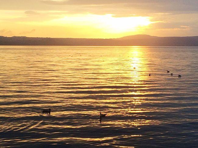 Enjoying The View Beautiful Nature Summer Views Sunset Sunset_collection Water Reflections Water_collection Water Lake View Anguillara Sabazia Italy Eyem Best Shots Eyem Nature Lovers