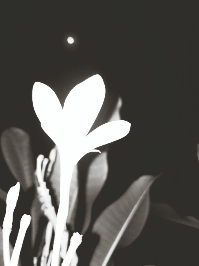 home, flower and... almost full moon Frangipani Home Grateful Feelblessed