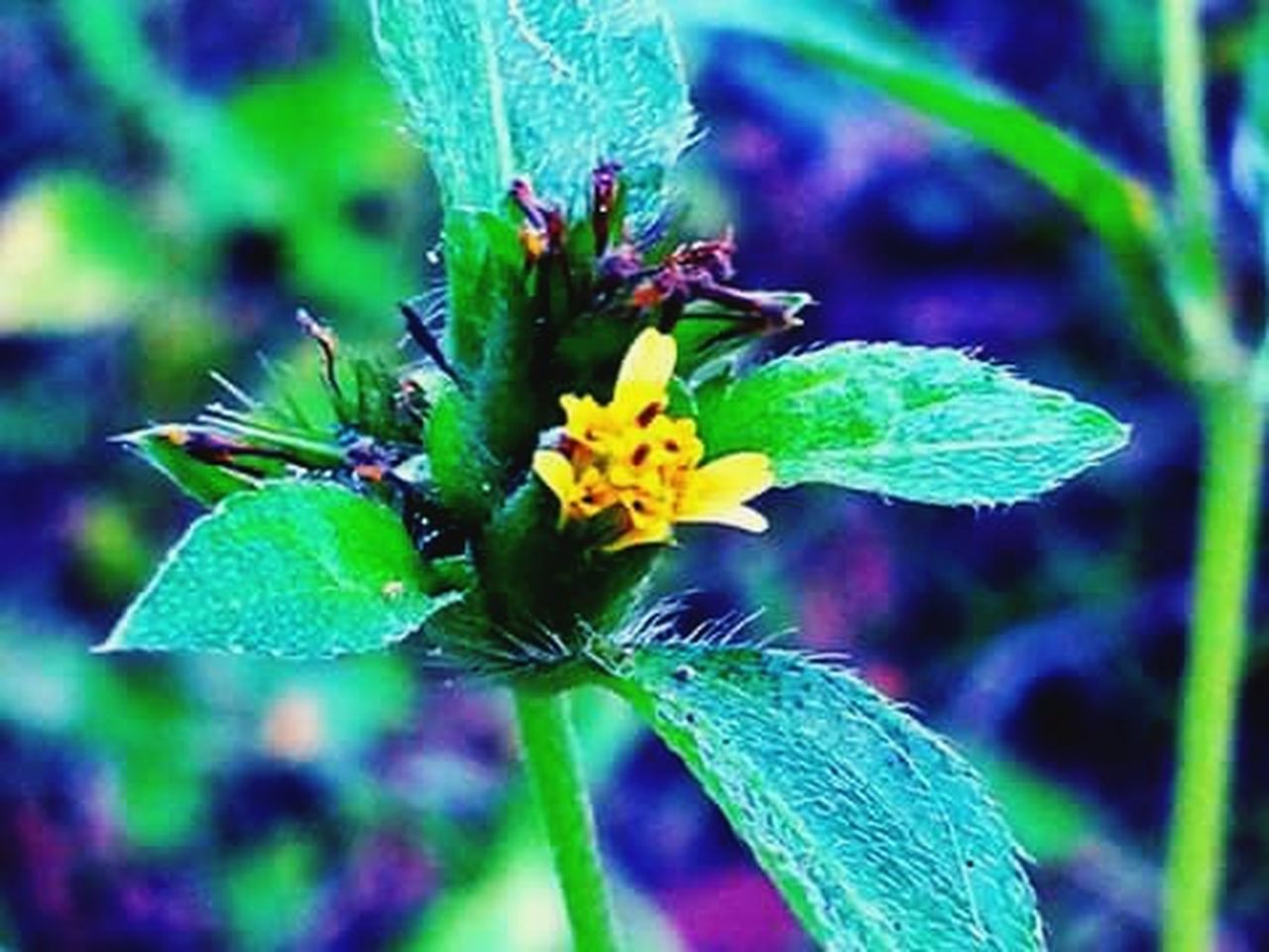 flower, green color, plant, nature, fragility, growth, leaf, focus on foreground, purple, close-up, beauty in nature, day, freshness, outdoors, no people, flower head, multi colored