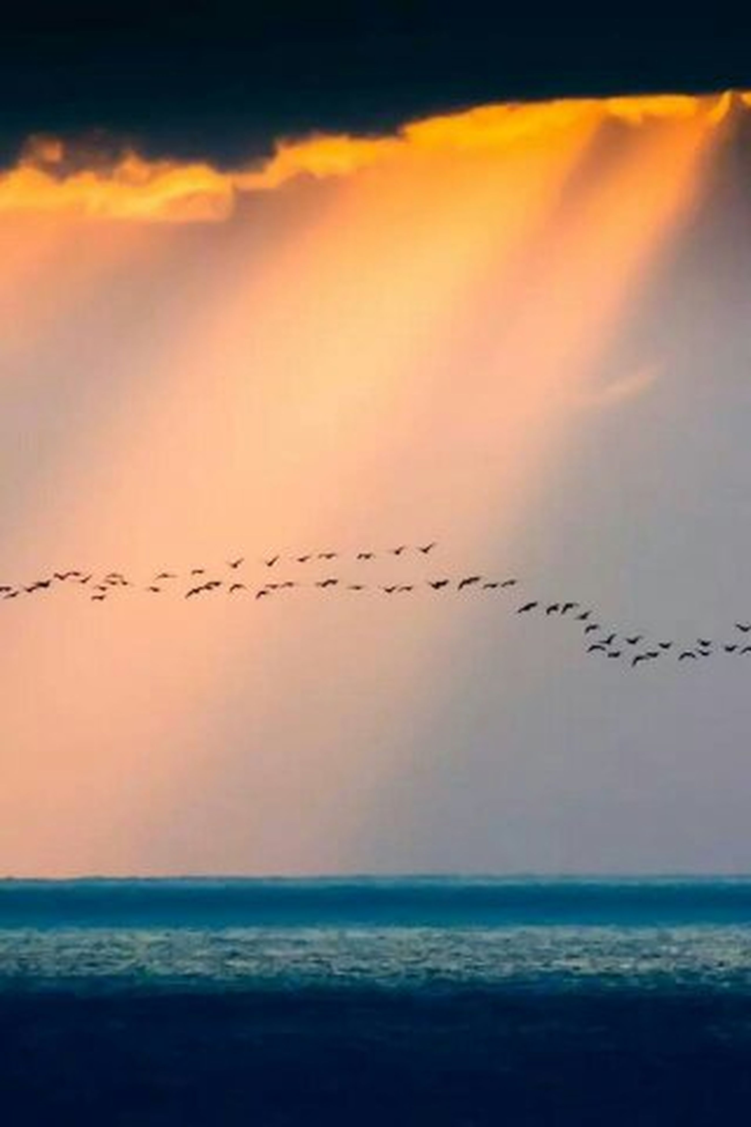 sea, horizon over water, sunset, water, bird, sky, scenics, beauty in nature, tranquil scene, nature, tranquility, animal themes, animals in the wild, wildlife, beach, silhouette, idyllic, outdoors, flying, orange color
