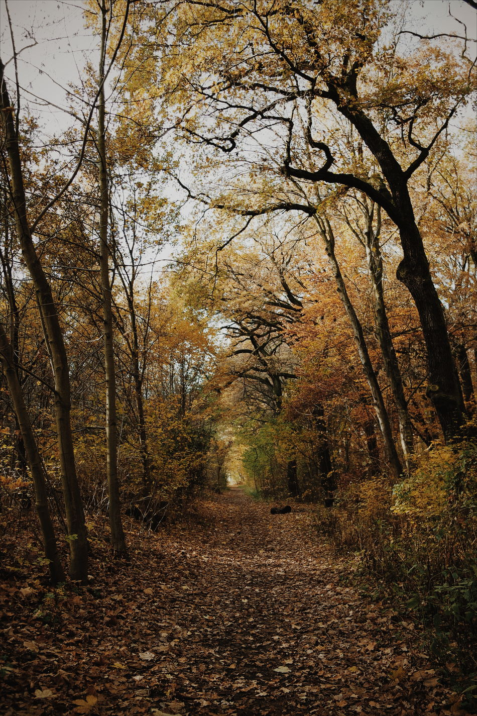 Outdoors Autumn No People Nature Beauty In Nature Tree Scenics Day Autumn Orange Autumn Colors Forest Path Nature