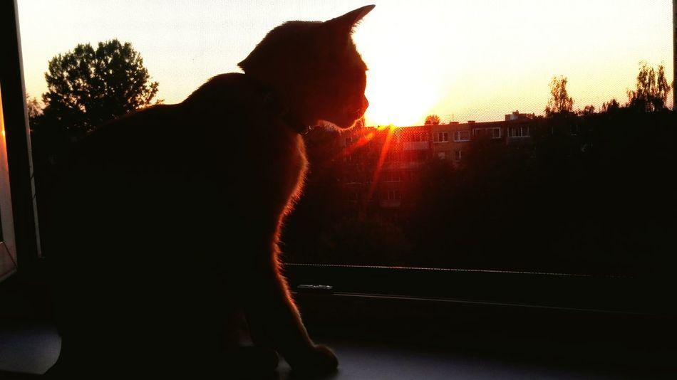 Animal And Sky Kukuruzas ;-) so Beautiful