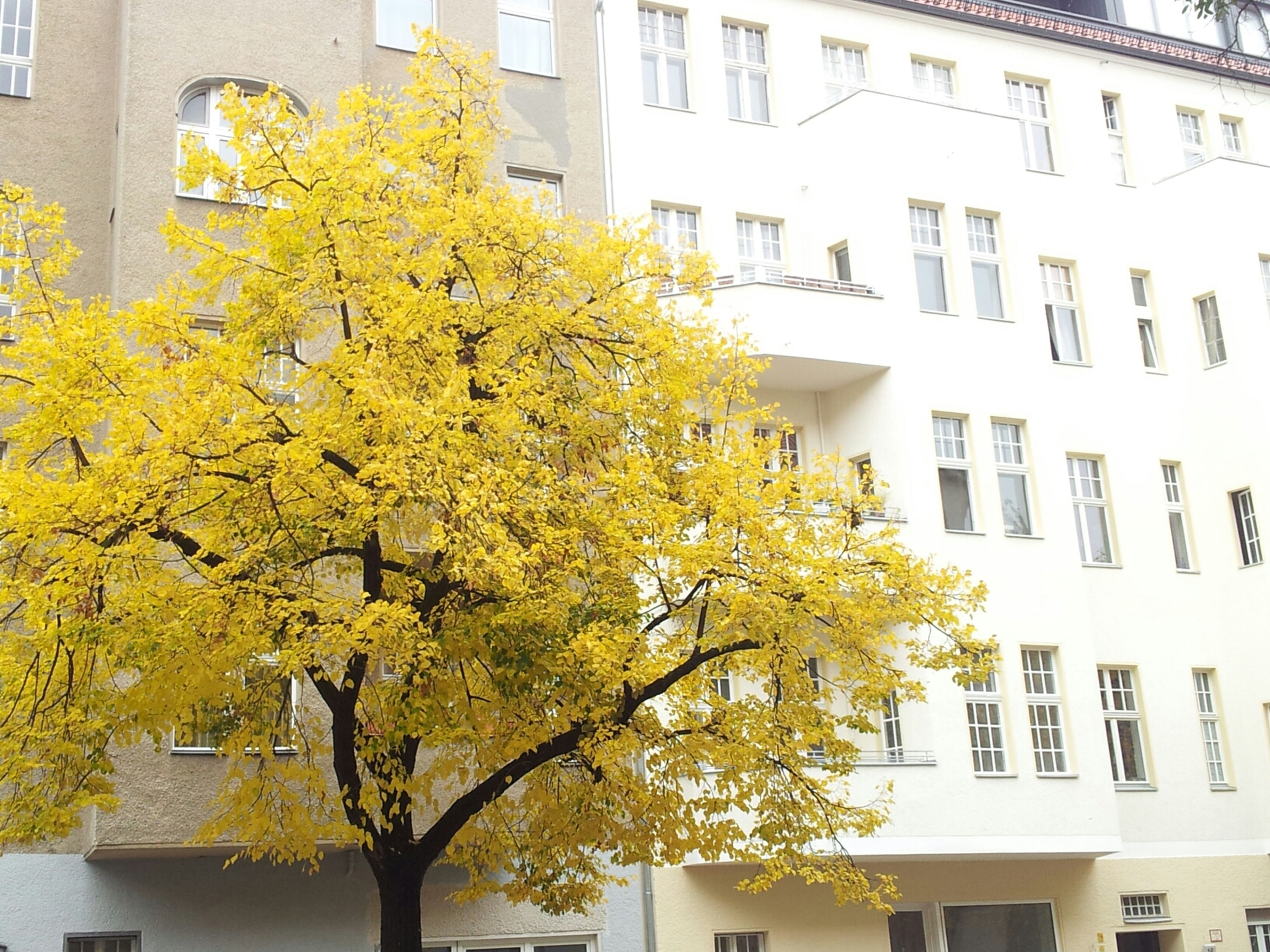 building exterior, architecture, built structure, yellow, tree, growth, flower, residential building, low angle view, window, residential structure, house, building, branch, city, day, freshness, plant, outdoors, nature