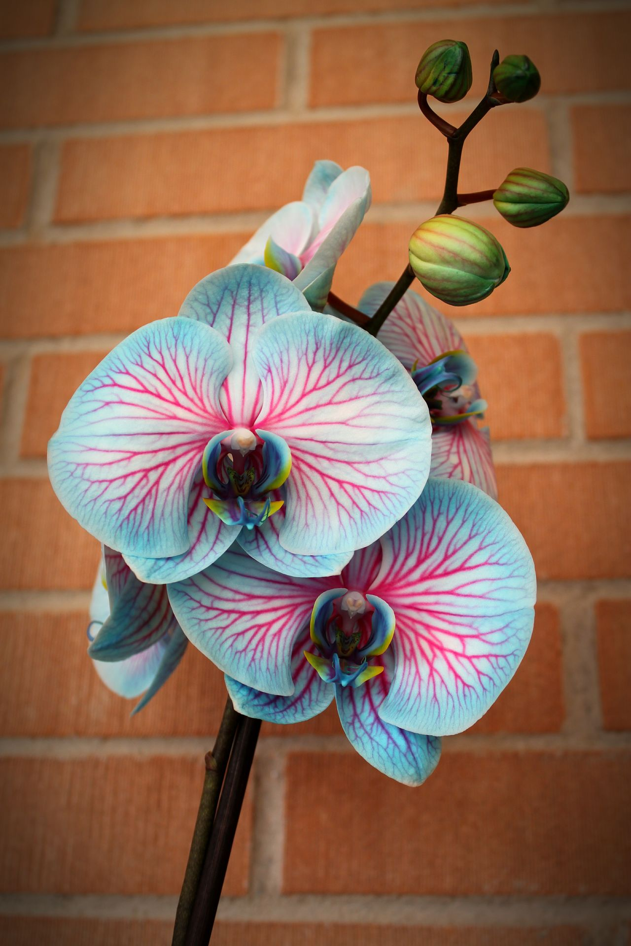 Blue Purple Purple Flower Orchidea Beautifull Gardening Proud Close-up Outdoors Flower Head No People Flower Day Nature Millennial Pink EyeEmNewHere