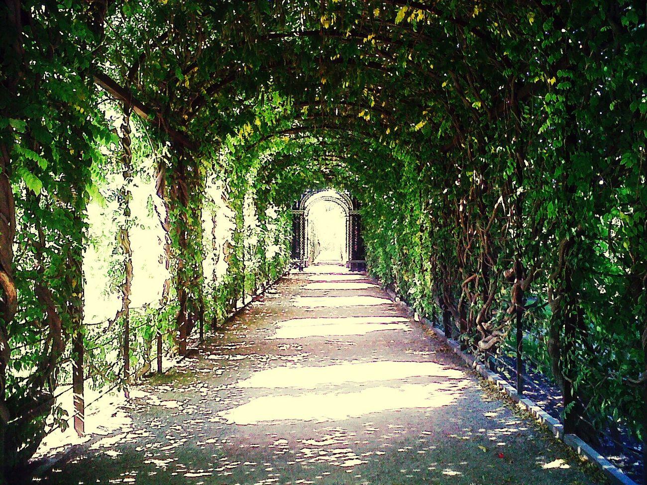 Vienna Shönbrunn Garden Garden Tunnel