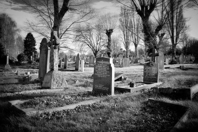 Monochrome Black&white Photography Dark Photography Darkart Cemetery Graveyard Beauty Blancoynegro Landscape Black And Light