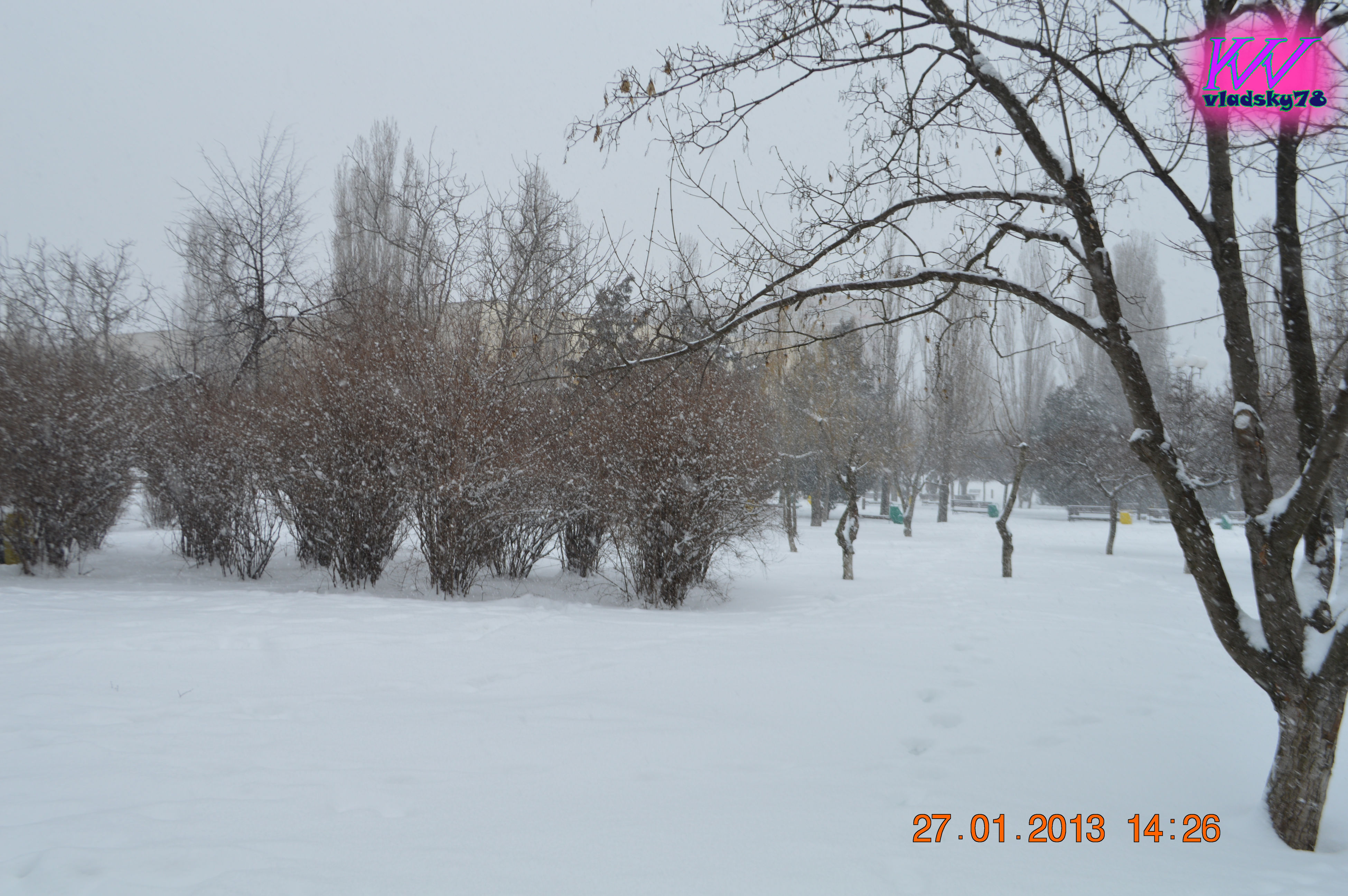 winter, tree, cold temperature, snow, nature, bare tree, outdoors, day, no people, beauty in nature, sky