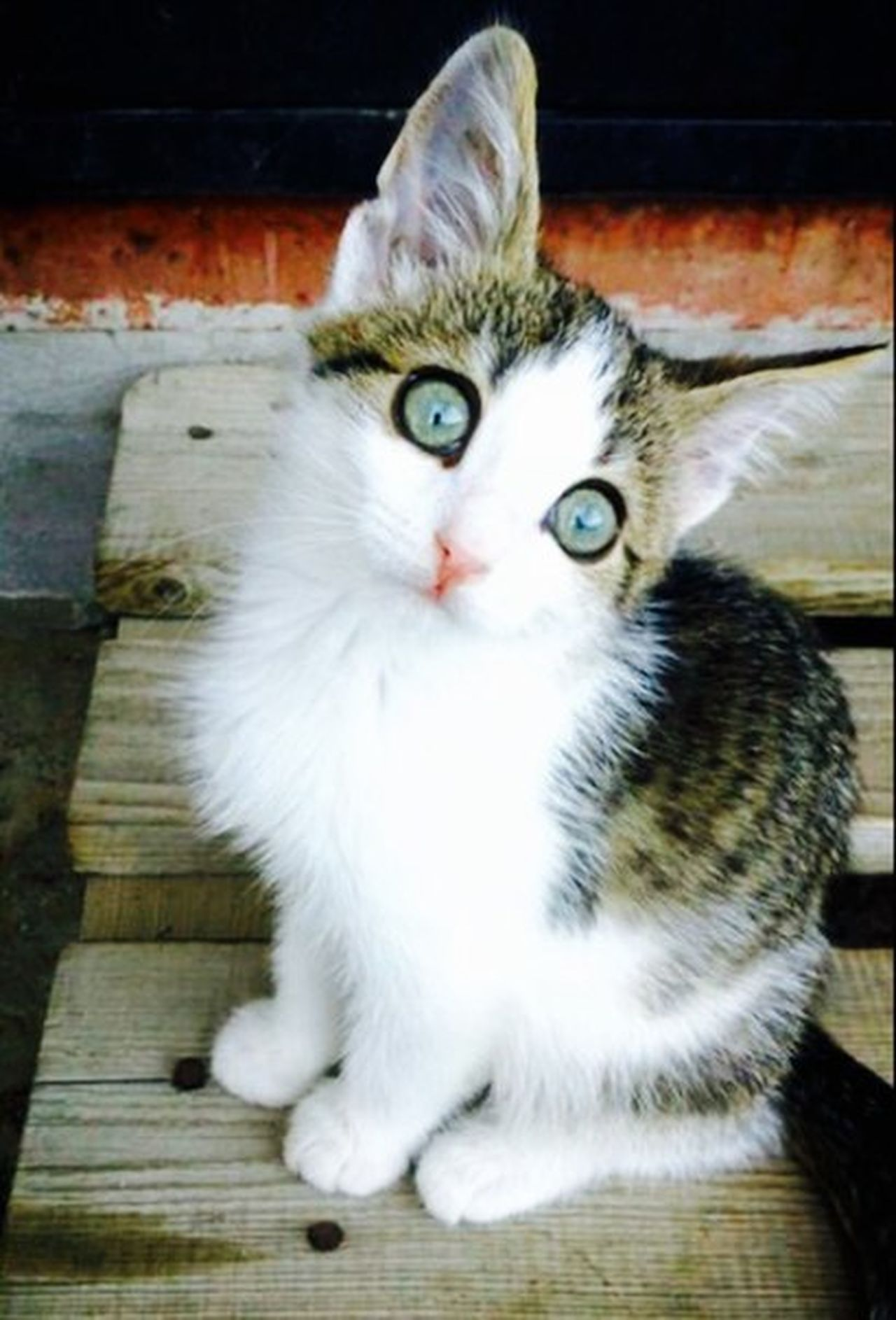 кот Котик красота красавец чудо💏💑💗 лапуля красавчики милота😊 котэ