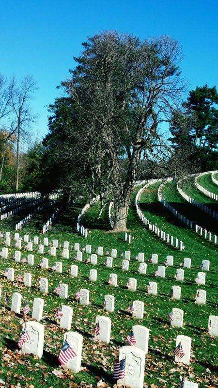 Flags for Veterans National Cemetery Korean War Veteran Cave Hill Cemetary Civil War