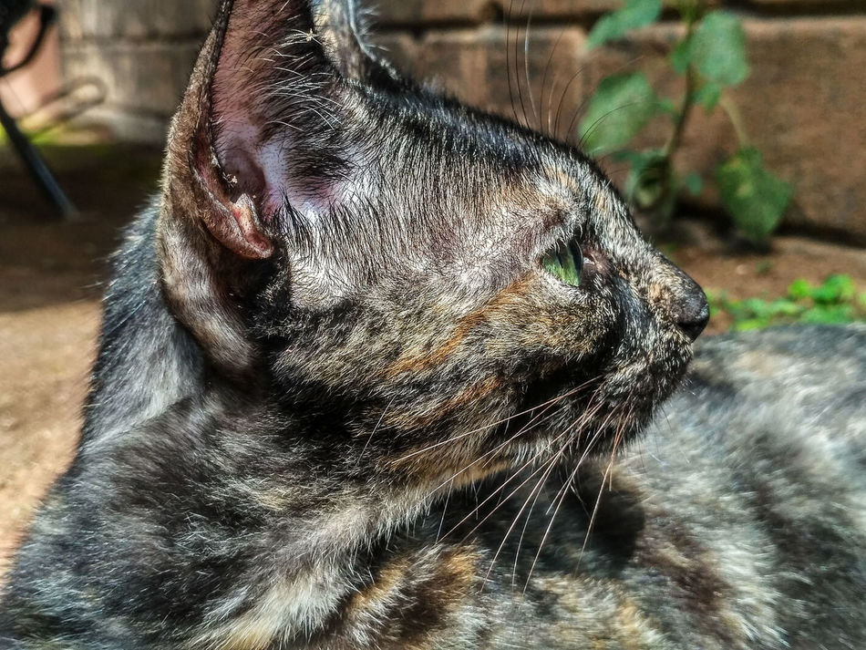 she doesn't cope well with the camera.... Close-up Focus On Foreground Outdoors Mammal One Animal No People Day