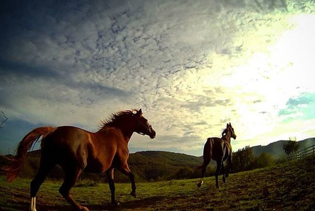 🌇Morning Filly Running Horse Racehorse Sunrise Nature Equine Equestrian Equestrianlife Stable Sport Colt Forest Green Cloud Clouds Instasyon Istanbuldayasam Gopro Winter October