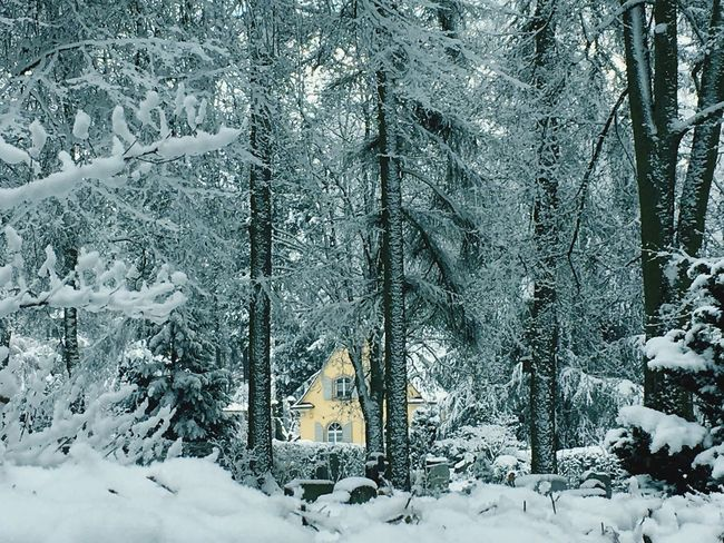 A House in the snow Winter Idyllic Nature Tree Outdoors Day Landscape Quiet Weather Wonderful View A Walk To Remember