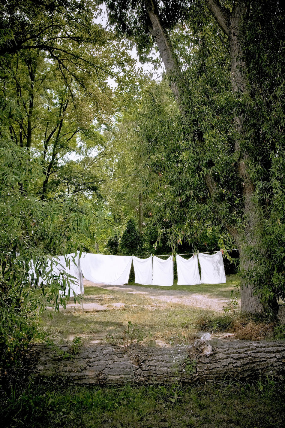 White Laundry Absence Bench Branch Empty Forest Grass Green Color Growth Laundry Laundry Day Laundry Line Outdoors Plant Tranquility Tree Trunk White Laundry