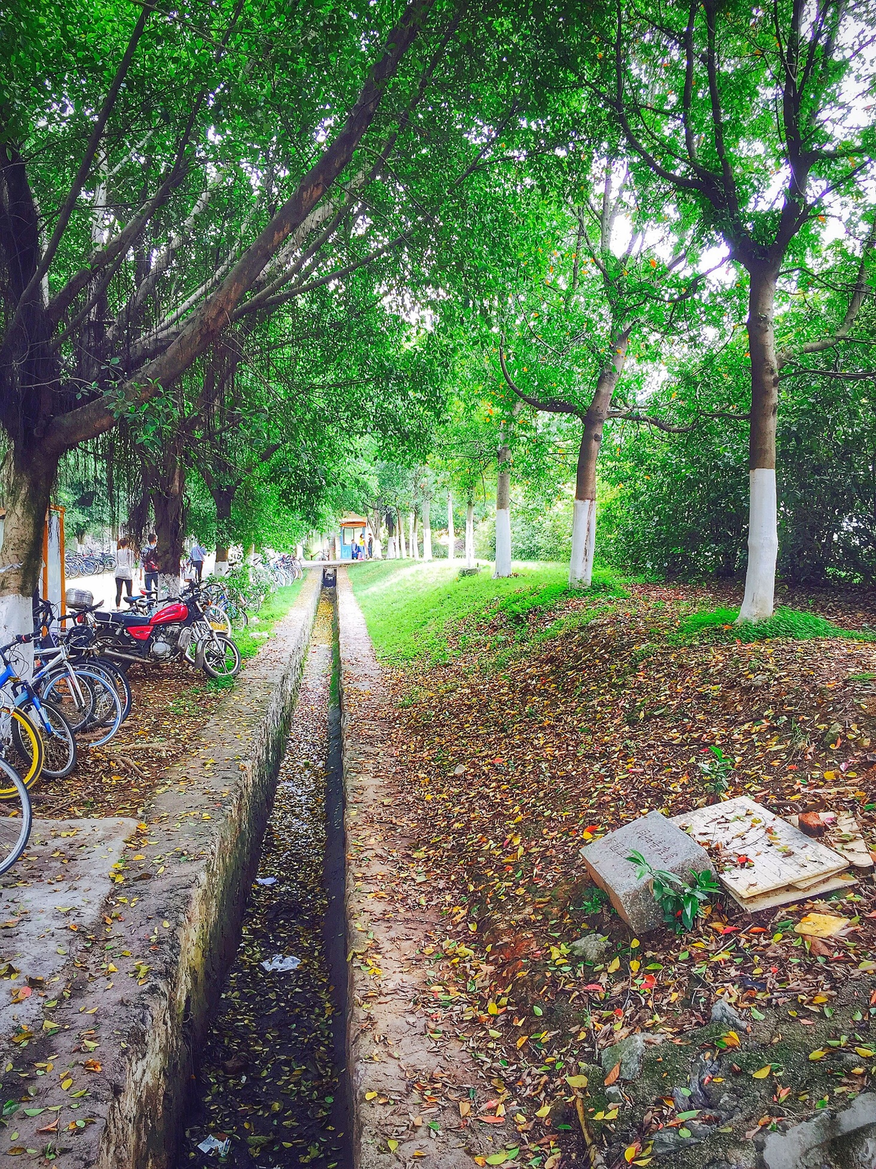 tree, the way forward, growth, footpath, park - man made space, leaf, green color, plant, nature, walkway, tranquility, day, diminishing perspective, sunlight, outdoors, pathway, formal garden, park, empty, beauty in nature